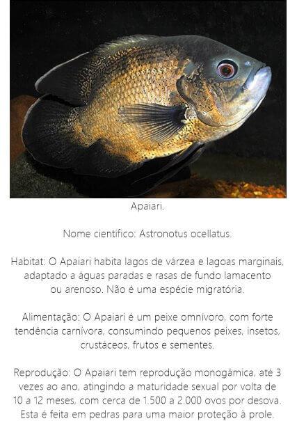 Peixe-Apaiari