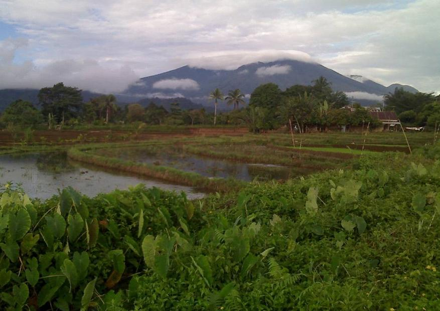 Gambar Pemandangan Sawah Desa | Download Gratis