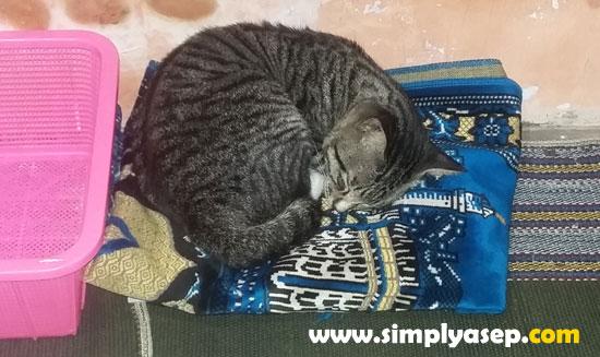 TIDUR DI ATAS SAJADAH : Tadinya sudah saya pindahkan ke tempat lain karena sajadah harus bersih karena akan digunakan untuk sholat, Tadi kucing ini tidak mau., Begitu saya kembalikan sajadahnya dan meletakkan sang kucing di atas sajadah itu, kucing ini melanjutkan tidurnya. Wallahu Alam. Foto Asep Haryono