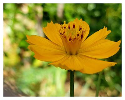 Nunu S Garn Und Stofflabor Unbekannte Schonheit Im Beet