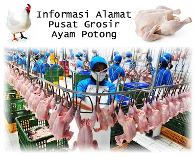 Tempat Kulakan Grosir Ayam Potong Segar Berkwalitas