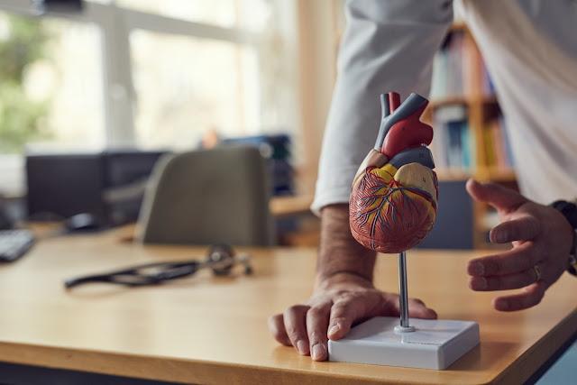 Hjertemodeller hos eAnatomi