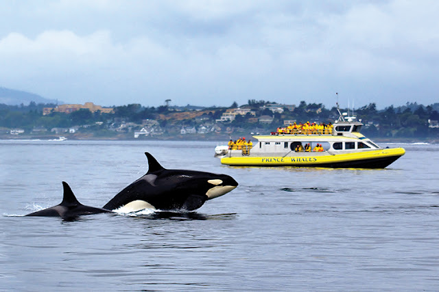Observar Baleias em Victoria