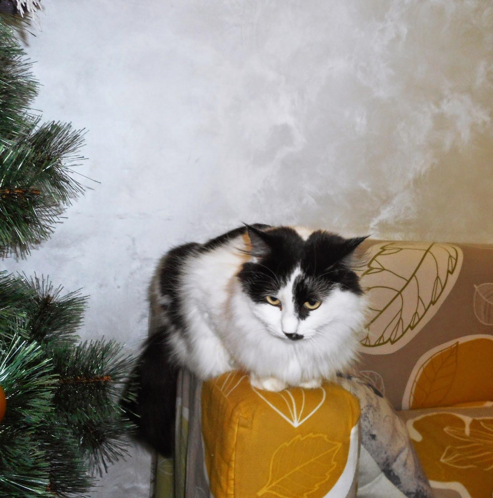 жительница кото - кафе
