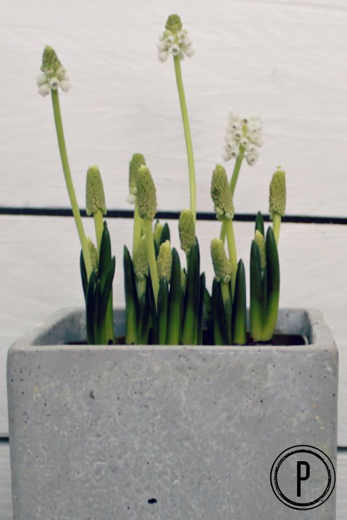 nurmikon kylväminen huhtikuussa