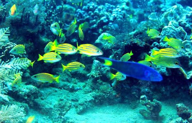 Pengertian Ekosistem Laut, Terumbu Karang dan Zona Perlindungannya
