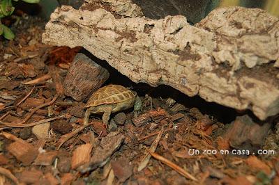 Refugio para tortugas