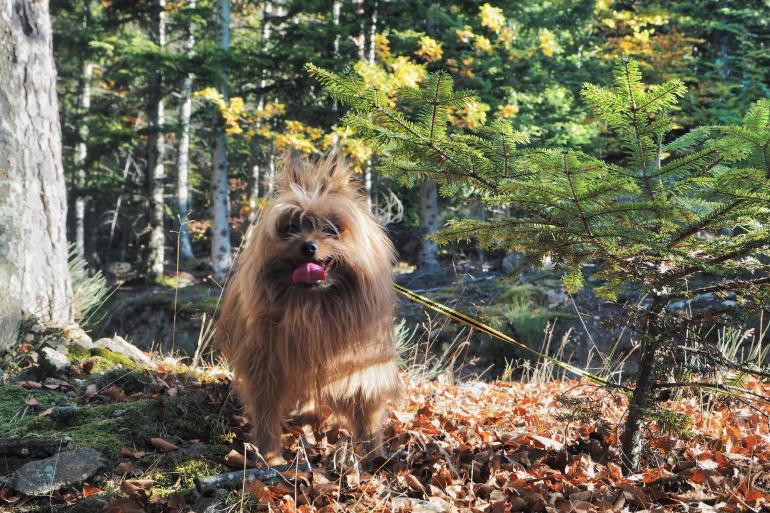 Promenade en forêt avec son chien