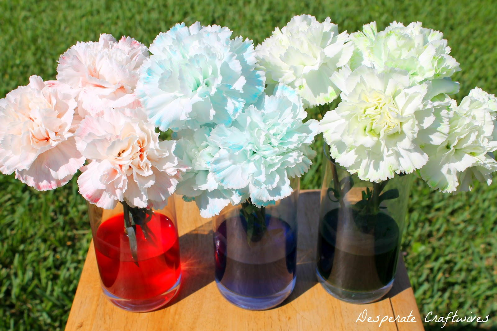 Desperate craftwives colored carnation experiment for How to dye flowers using food coloring