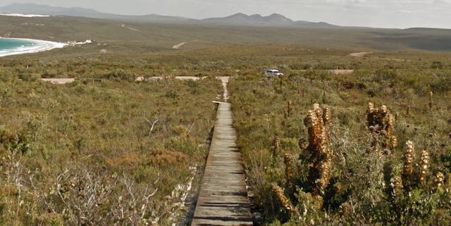 Street View imagery of Royal Hakea plant species, seen along East Mount Barren