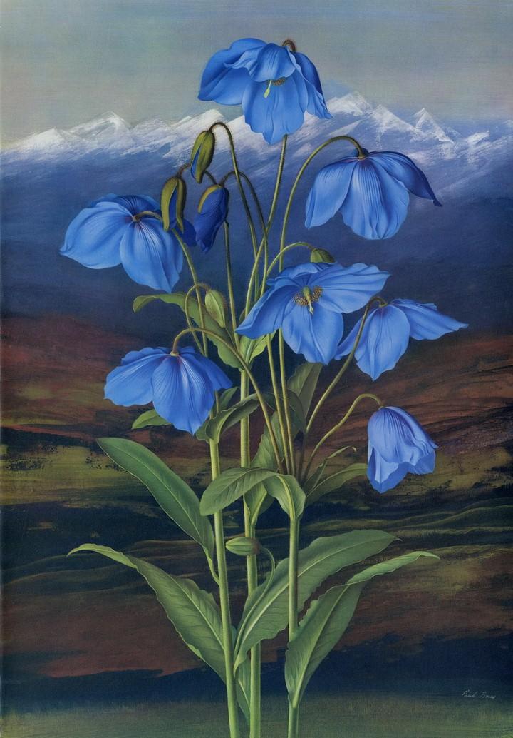 Paul Jones. Акварельные рисунки цветов 25