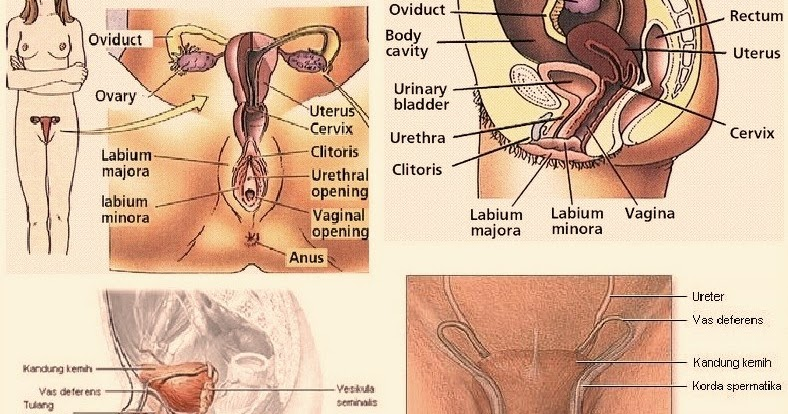Most Amazing Facts About Human Genitals Men And Women-9998