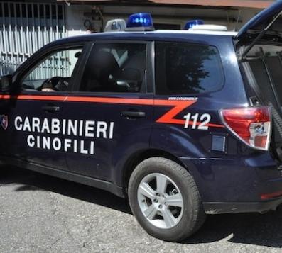 """Quentin, cane """"carabiniere"""" sanseverese, smaschera giovane spacciatore. È accaduto a San Paolo di Civitate"""