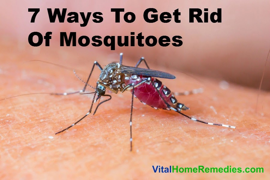 Natural Ways To Get Rid Of Mosquitoes At Home
