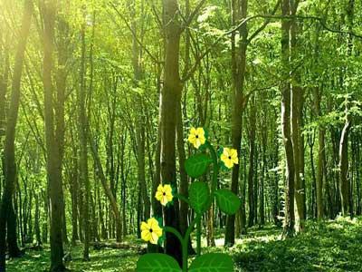 Escape Panda from Fire Forest - Juegos de Escape