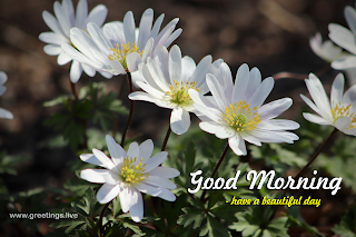 good morning wishes with white flowers