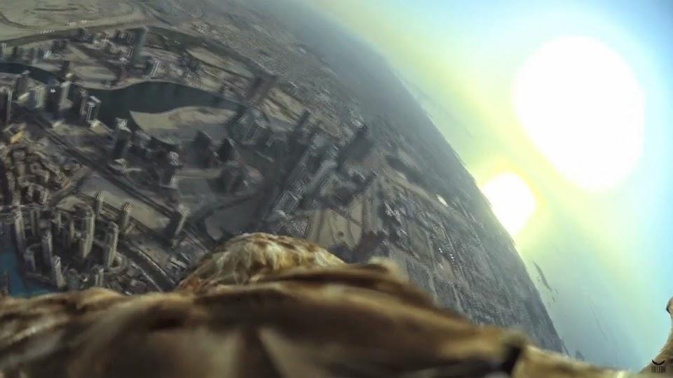Eagle flying in Dubai randommusings.filminspector.com