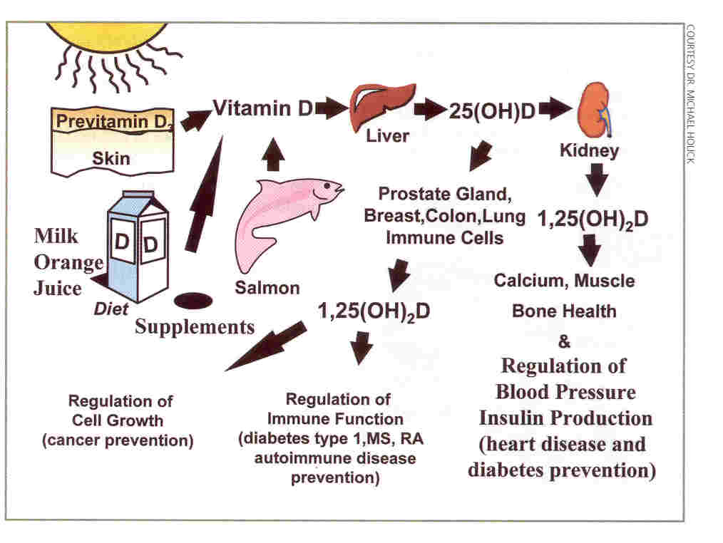 theworld: Difference Between Vitamin D and Vitamin D3