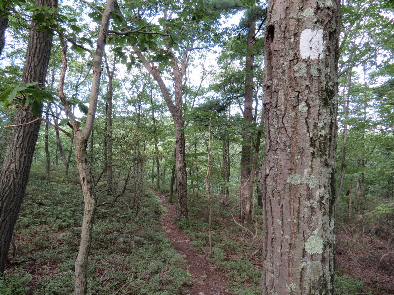 Gone Hikin Sterling Forest State Park NY  Wildcat Mountain