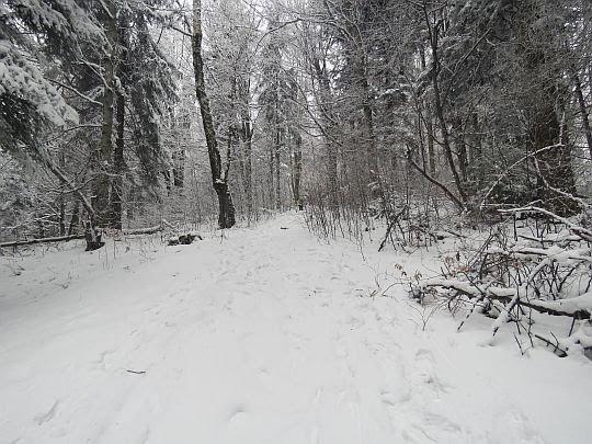 Las Śnieżnicy.