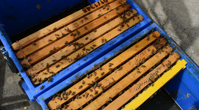 Τι πιο εύκολο? Εξίσωση μελισσιών, πως σώζουμε τα πιο μικρά μας μελίσσια