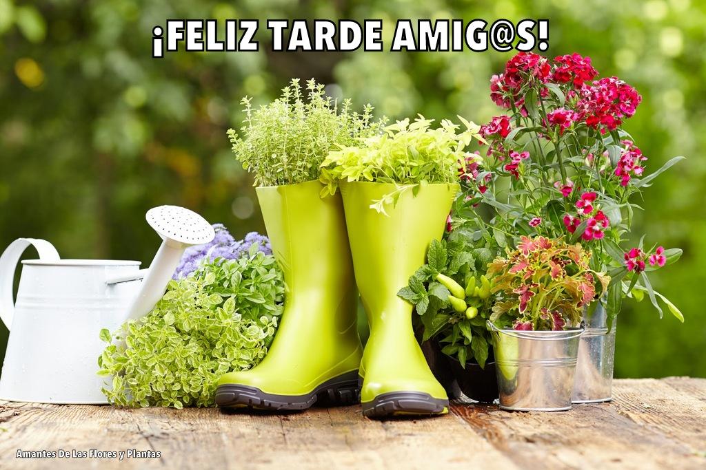 Buenas Tardes Amig@s - Página 4 1-fotos%2Bde%2Bplantas%252C%2Bflores%2By%2Bjardines%2B-%2Bplants%252C%2Bflowers%2Band%2Bgarden%2Bphotos%2B%25281%2529