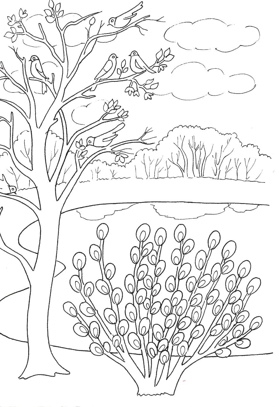 РАЗВИТИЕ РЕБЕНКА: Весна - Раскраска