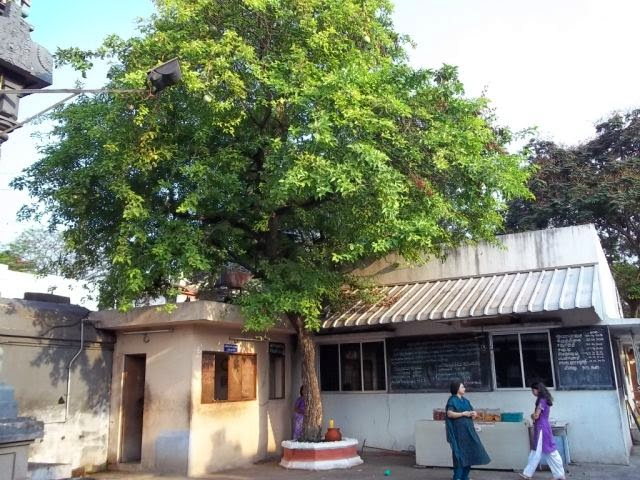 Image result for bilva tree at home