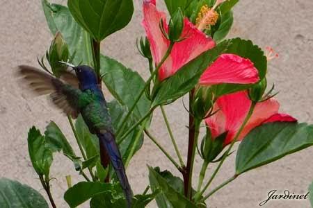 Flor atrativa para beija-flores