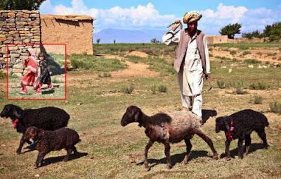 Foto penduduk Afghanistan menggembala