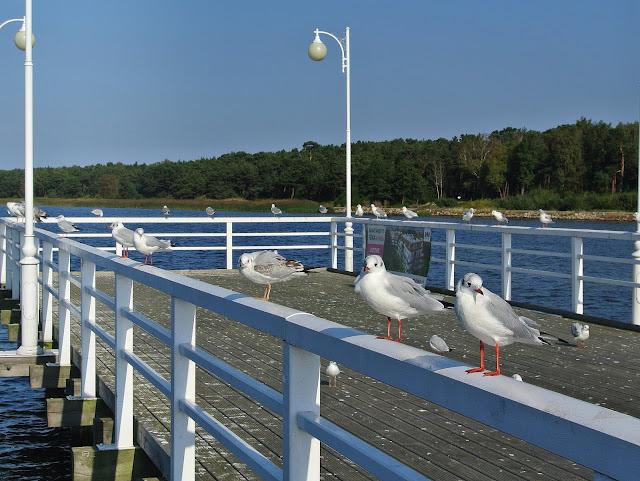 Jurata molo, mewy, wakacje nad Bałtykiem