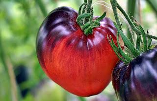 http://tomatprat.blogspot.no/2016/08/sgt-peppers.html