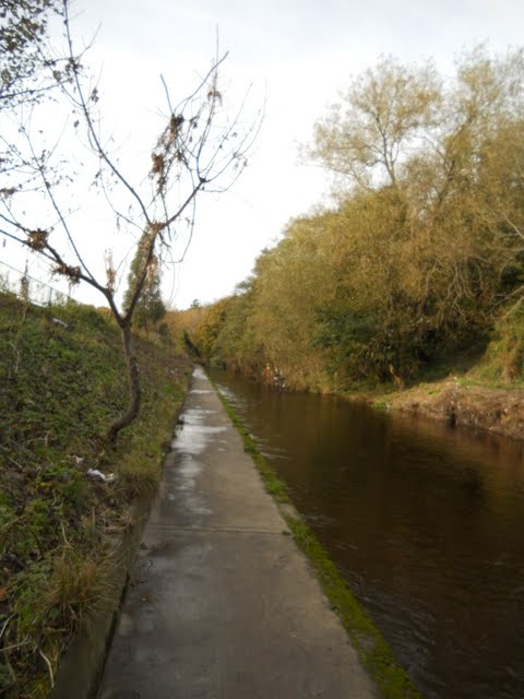 Walk the River Dodder in Dublin - path