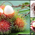 Health Benefits Of Rambutan You May Not Know Of