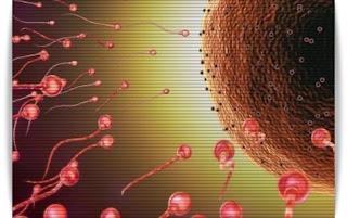 Cara Alami Memperbanyak Sperma Paling Ampuh