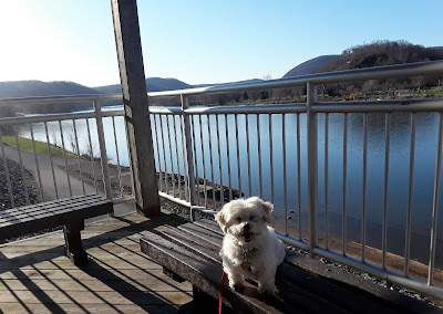 Dog friendly riverwalk in Lock Haven PA.  Dogs, Dog friendly, Dog friendly travel destination in Pennsylvania