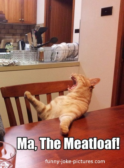 Hilarious Ma The Meatloaf Cat Joke Picture