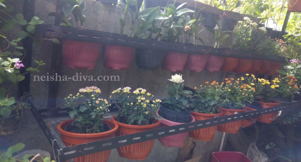 Rumah Bunga Neisha Rumah Bunga Neisha Diy Membuat Rak Bunga Tempel Dinding Praktis Dan Murmer