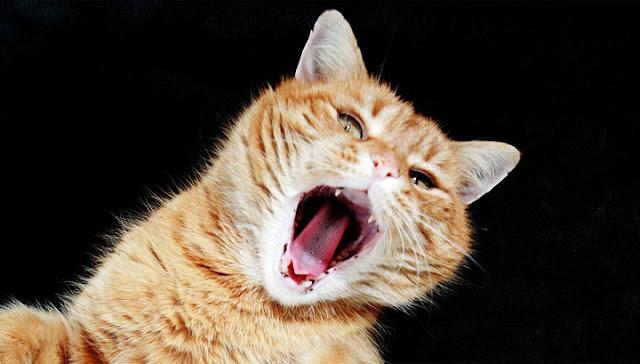 В Шереметьево сбежавший от пассажирки кот устроил дебош в бутике