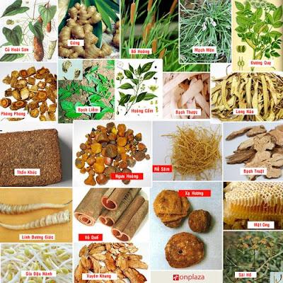 Những thành phần cơ bản trong thực phẩm chức năng viên an cung ngưu hoàng hoàn