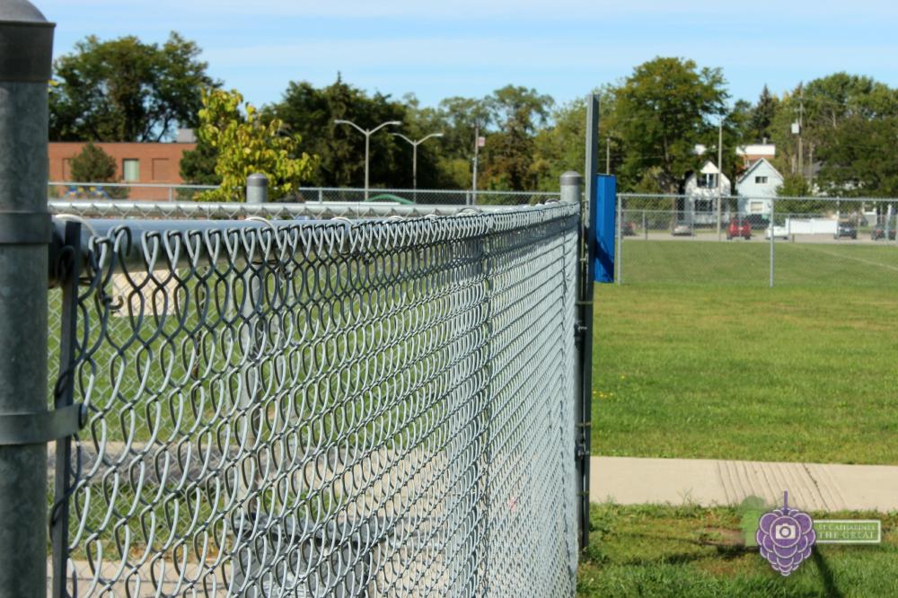Carol Disher Leash Free Dog Park