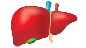 داء الكبد الدهنية الكحولي وداء الكبد الدهنية غير الكحولي
