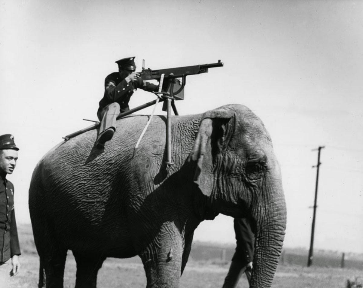 Shooting an Elephant 6