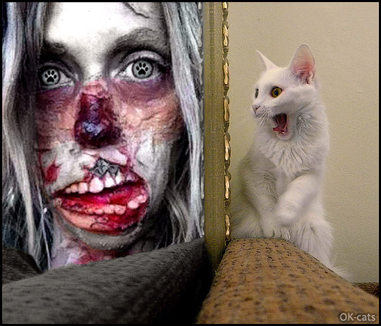 Photoshopped Cat picture • OMG, poor Kitty is scared of Zombie woman with cat paws in eyes!