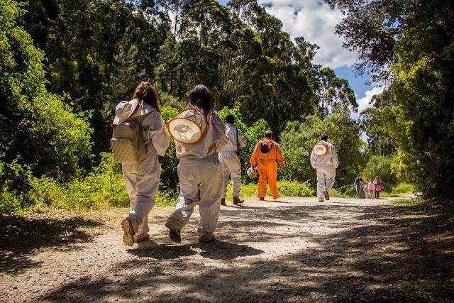 Festa dos Maios-visita-ao-apiário