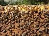 Πως δυναμώνουμε ένα μελίσσι: Γράφει ο μεγάλος καθηγητής μελισσοκομίας Παναγιώτης Καραπιπέρης...