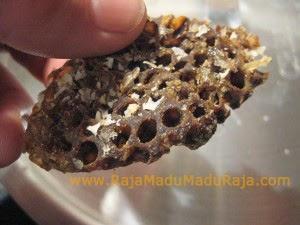 Sebongkah Sarang Lebah Gelap