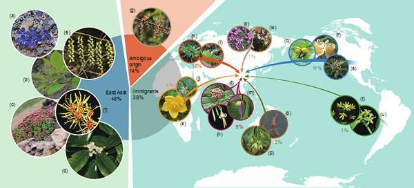 New insight on the formation of East Asian flora