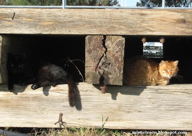 Кипр, Ларнака - коты под причалом