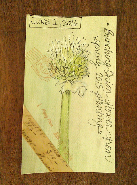 Card #9 Bunching green onion flower head, watercolor pencils, inks, washi tape, stamps, Christy Sheeler Artist, ICAD 2016, Index Card A Day